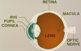Diagram of the different parts of the eye