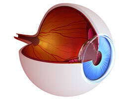 Eye diagram of retina